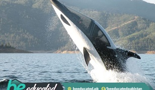 Amazing Whale Like Submerging Power Boat Seabreacher